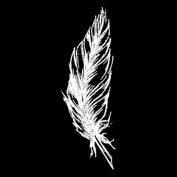 Eine weiße Feder