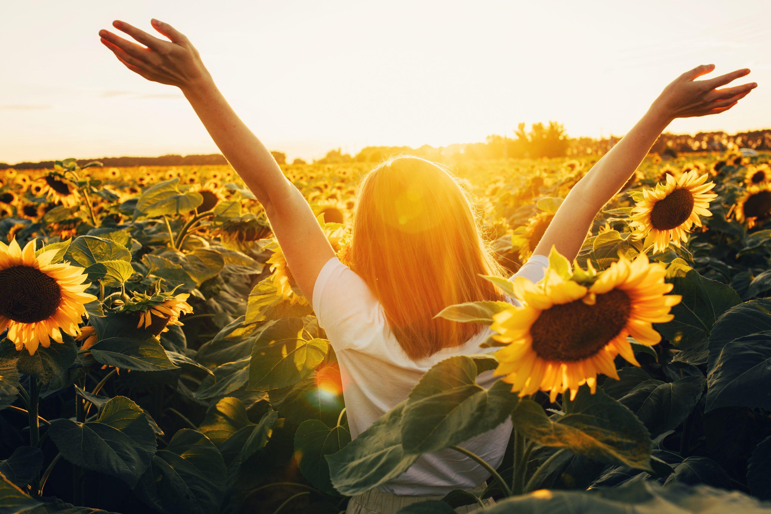 Ein Mensch steht in einem Sonnenblumenfeld